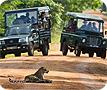 Leopard spotting in Yala, Sri Lanka